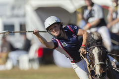 Polo-Cross Player Horse Stock Photo