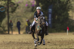 Polo-Cross Woman Rider Action Stock Photography