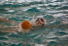 Polo d'eau Photo libre de droits