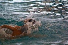 Polo d'eau Photographie stock libre de droits
