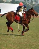 Polo, das in Kolkata-Indien spielt stockfotos