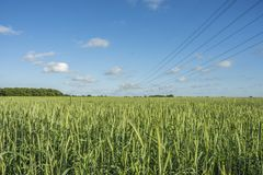 Polo de alta tensão no campo do campo de trigo Imagem de Stock Royalty Free