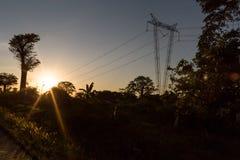 Polo de la electricidad que pasa a través de la selva con puesta del sol Foto de archivo