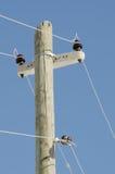 Polo de madeira da eletricidade Imagens de Stock