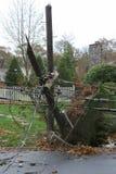 Polo de teléfono roto por la mitad durante la tormenta estupenda Sandy imagen de archivo libre de regalías