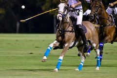 polo del cavallo nella partita di notte Fotografie Stock Libere da Diritti