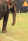 Polo do elefante Fotografia de Stock