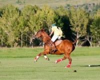Polo en Diamond Polo Club negro Imagen de archivo