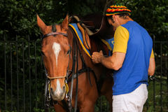 Polo equipment. Man saddling a polo horse. Royalty Free Stock Image