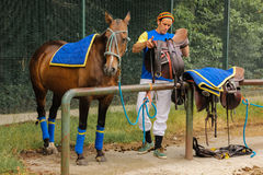 Polo equipment. Man saddling a polo horse. Stock Photos