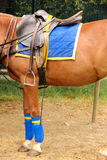 Polo equipment. Saddle and stirrup. Stock Image