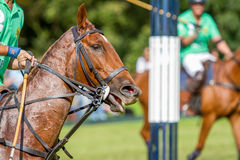Polo event Royalty Free Stock Photography