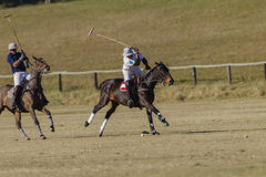 Polo Game Action Stock Image