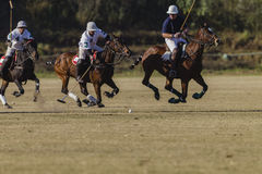 Polo Game Action Photos stock