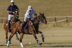 Polo Game Action Images libres de droits
