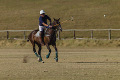 Polo Game Action Photographie stock libre de droits