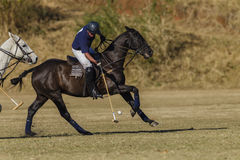 Polo Game Action Photo libre de droits