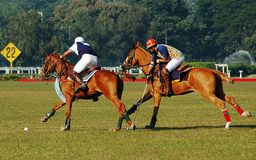 Polo Game of Kolkata-India Stock Photo