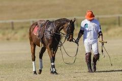 Polo Game Rider Horse Stock Photo
