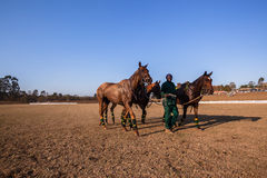 Polo Grounds Grooms Horses Shongweni Hillcrest Immagini Stock