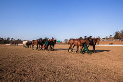 Polo Grounds Grooms Horses Shongweni Hillcrest. Polo Grounds Grooms taking Horses to stables Shongweni Hillcrest outside Durban South Africa stock photo