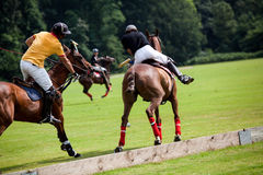 Polo horse break Royalty Free Stock Image