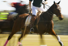 Polo Horse in Flight. A polo horse in flight during a match Stock Photo