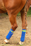 Polo horse. Hind legs and braided tail. Royalty Free Stock Photo