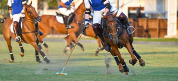 Polo horse player ride Royalty Free Stock Photography