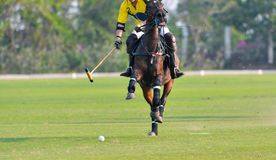 Polo Horse Player Riding Immagine Stock