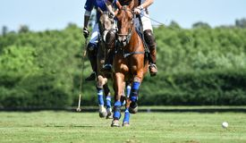 Polo Horse Player Riding Fotografia Stock