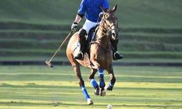 Polo Horse Player Riding fotografía de archivo