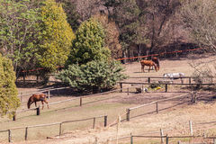 Polo Horse Ponies Saddles. Horses ponies animals in field paddock Royalty Free Stock Photography