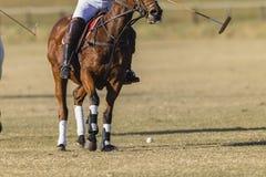 Polo Horse Rider Field Immagini Stock