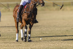 Polo Horse Rider Field Stock Images