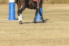 Polo Horse Rider Mallet Immagini Stock