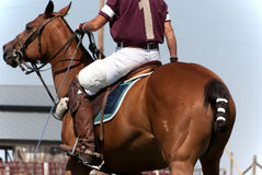 Polo Horse And Rider Ready For Game. A close-up of a horse and rider ready for the polo game royalty free stock images