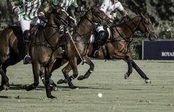 Polo Horses Imagen de archivo libre de regalías
