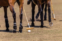 Polo Horses Hoofs Mallet Ball. Polo Horses Hoofs Mallets Ball closeup detail Stock Photo