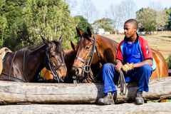 Polo Horses Ponies Groom Stock Photography