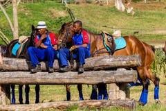 Polo Horses Ponies Grooms Stock Foto