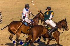Polo jeźdzów koni sztuki akcja Fotografia Stock