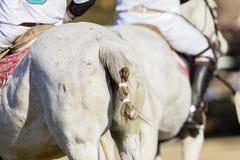 Polo koni jeźdzowie Zdjęcie Royalty Free