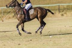 Polo konia jeździec Obrazy Royalty Free