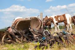 Polo konie Fotografia Stock