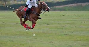 Polo konik Biegający W Macth fotografia royalty free