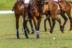 Polo koników graczów akcja Fotografia Stock