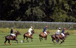 Polo match. A polo match in progress Stock Photos
