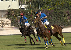 Polo Match Royaltyfri Fotografi