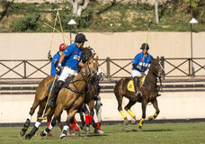 Polo Match Stockbilder